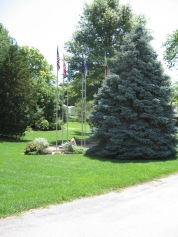 Trees & Driveway 022